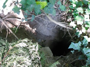 Badger sett.
